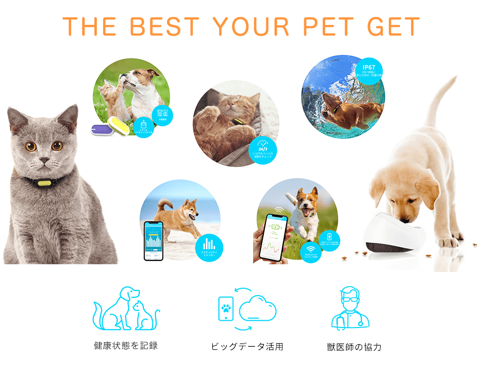 The Best Your Pet Get